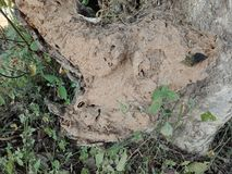 Felsen gemasert mit Schlammhintergrund, Naturlandschaft lizenzfreie stockbilder
