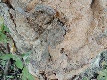 Felsen gemasert mit Schlammhintergrund, Naturlandschaft stockfotografie