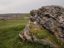 Felsen im Burren in Irland Stockbilder