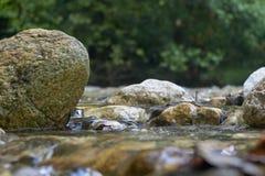 Felsen im Fluss stockbild