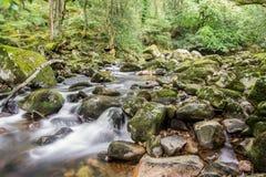 Felsen im Fluss Stockbilder