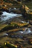 Felsen im Flussbett Stockbilder