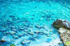 Felsen im Meer Stockfotografie