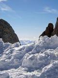 Felsen im Schnee Lizenzfreies Stockbild