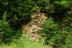 Felsen im Wald Stockbild