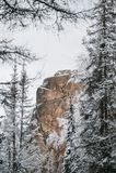 Felsen im Winterwald Stockbild