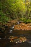 Felsen mit Blättern und Nebenfluss. Montseny, Spanien. Lizenzfreies Stockfoto