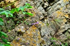 Felsen mit Blumen und Gras Lizenzfreies Stockbild