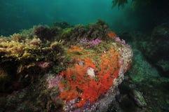 Felsen mit bunten wirbellosen Tieren Lizenzfreie Stockfotografie