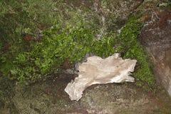 Felsen mit dem Farn und Moos bedeckt und ein einsames kleines Stückholz Stockfoto
