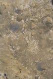 Felsen mit eingebetteten Fossilien stockfotos