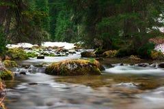 Felsen mit Gras in flüssigem Wasser Lizenzfreie Stockbilder