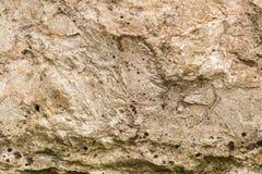 Felsen mit Moos Stockbilder