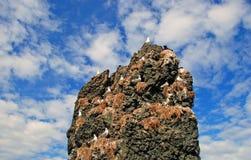 Felsen mit Seemöwen Stockfoto