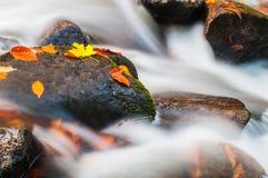 Felsen und Ahornblätter im Strom in der Fallfarbe Stockbilder