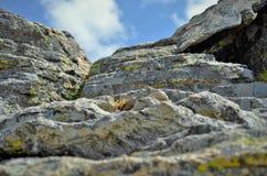 Felsen und Anlage Stockbild