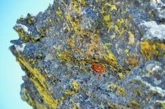 Felsen und Anlage Lizenzfreies Stockbild