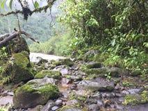 Felsen und Anlagen in Ecuador Stockbilder