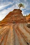 Felsen und Baum Stockfoto