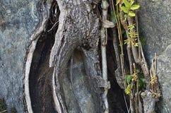 Felsen und Baum im Herbst Stockfotografie