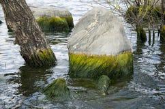 Felsen und Baumstamm mit Wasser in erhai See stockbilder