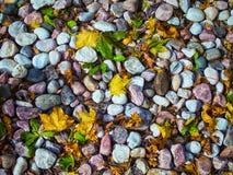 Felsen und Blätter Lizenzfreie Stockbilder
