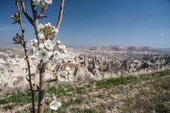 Felsen und Blumen Lizenzfreie Stockfotografie