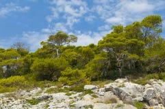 Felsen und die trres Landschaft Stockbilder