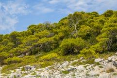 Felsen und die trres Landschaft Stockfotografie