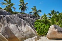 Felsen und Dschungel Stockbilder