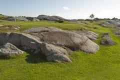 Felsen und grünes Gras des Kurzschlusses gestalten mit einer Palme landschaftlich Stockfoto