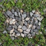 Felsen und Gras Stockfotos
