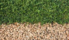 Felsen und Gras. lizenzfreie stockbilder
