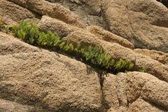 Felsen und Gras Stockbild