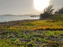 Felsen und Gras setzen mit eingestürzter alter Anlegestelle auf dem Tipp von auf den Strand stockbilder