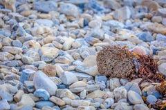 Felsen und Meerespflanze stockfoto
