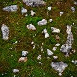 Felsen und Moos Stockfotografie