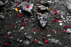 Felsen und Rosen Stockfotografie