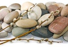 Felsen und Weidenniederlassungen Stockbild