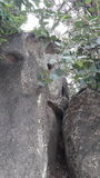 Felsen und Wurzeln sind der Höhepunkt gewesen Stockbild