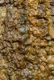 Felsen unter Wasser stockfotografie