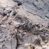 Felsendetail von der Juraküste Stockfoto
