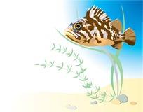 Felsenfische in der Wasservektorillustration vektor abbildung