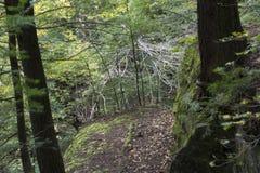 Felsenwand, Ash Cave, Ohio stockfotos