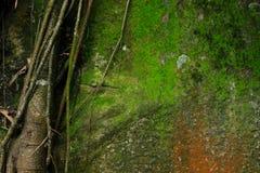 Felsenwand bedeckt vom Moosgrün und von der Orange stockbild