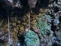 Felsenwasser und -GRÜN Stockfotos