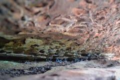 Felsformationen am hohen Rock, Tunbridge Wells, Kent, Großbritannien Stockbilder