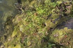 Felsige Flussbank bedeckt mit Moos, Gras und Pilzen Lizenzfreie Stockfotografie
