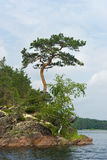 Felsige Insel lizenzfreie stockfotografie