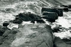 Felsige Küste Stockfotografie